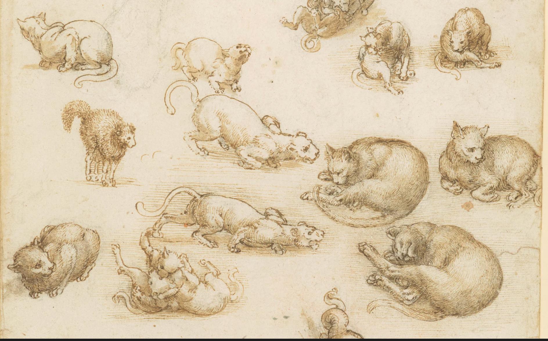 Leonardo's drawings of cats